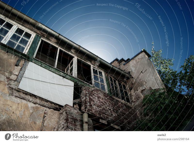 Entwohnt I Himmel alt Pflanze Blatt Haus Fenster Wand Gebäude Mauer hell offen Vergänglichkeit Spuren Verfall Backstein trashig
