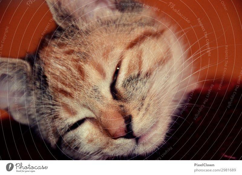 Träumende Katze Tier ruhig Freude Gefühle braun Stimmung niedlich schlafen Haustier