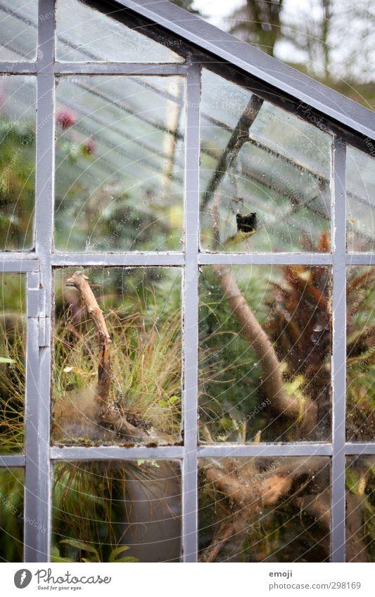Gehweghaus Natur grün Pflanze Umwelt Frühling natürlich Sträucher exotisch Grünpflanze Gewächshaus