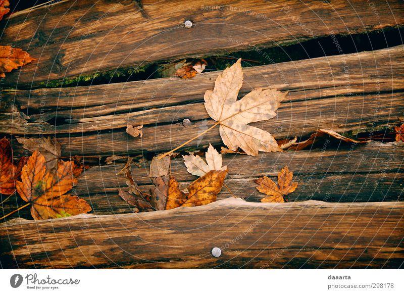 Freundliche Blätter Umwelt Natur Pflanze Herbst Blatt Ahornblatt Herbstlaub Garten Park Feld Wald Holzbrett genießen hängen Ferien & Urlaub & Reisen elegant