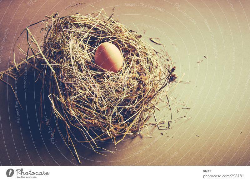 Nesthocker Lebensmittel Bioprodukte Vegetarische Ernährung Ostern warten frisch natürlich trocken braun Ei Hühnerei Stroh Heu Landleben Gelege Oval Farbfoto