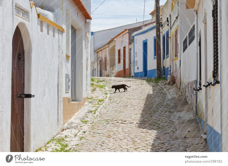 Rubble the cat and out the mouse! Portugal Algarve Raposeira Stadt Kleinstadt Haus Straße Katze schwarze Katze Volksglaube beschaulich Ferien & Urlaub & Reisen