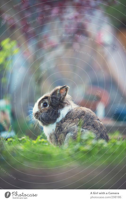 introducing Albert Tier Hase & Kaninchen 1 sitzen warten schön achtsam Haustier freilaufend Gedeckte Farben Außenaufnahme Menschenleer Textfreiraum oben