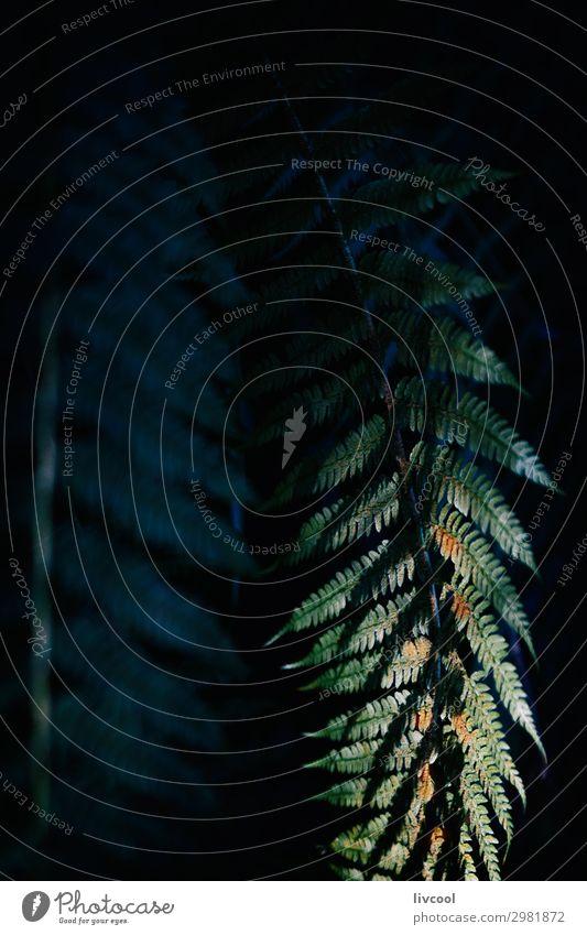 Farn zwischen den Schatten Erholung Natur Landschaft Pflanze Urelemente Frühling Baum Blatt Garten Park Feld Wald Dorf Holz Coolness dunkel frei schön niedlich