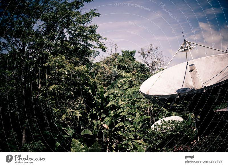 big brother or big mother? Satellitenantenne Satellitenstation Technik & Technologie Telekommunikation Informationstechnologie Umwelt Natur Landschaft Pflanze