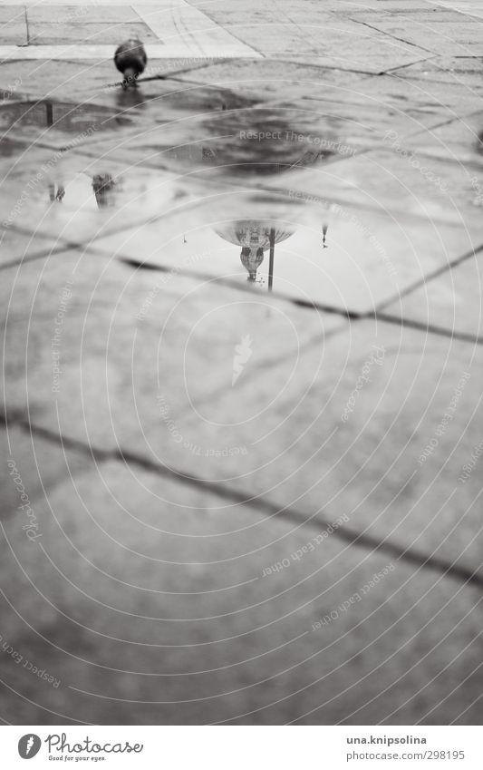 pfütze und pfogi Wasser schlechtes Wetter Regen Pfütze Venedig Kirche Palast Platz Bauwerk Gebäude Taube stehen nass Stadt Perspektive trist Schwarzweißfoto