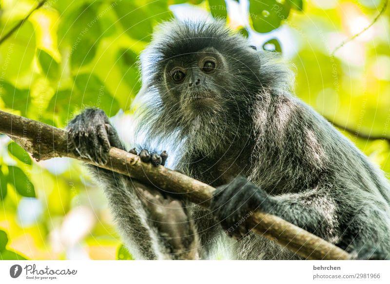 hey kleine... Ferien & Urlaub & Reisen Baum Tier Blatt Ferne Tourismus außergewöhnlich Freiheit Ausflug Wildtier Abenteuer fantastisch beobachten Ast Asien