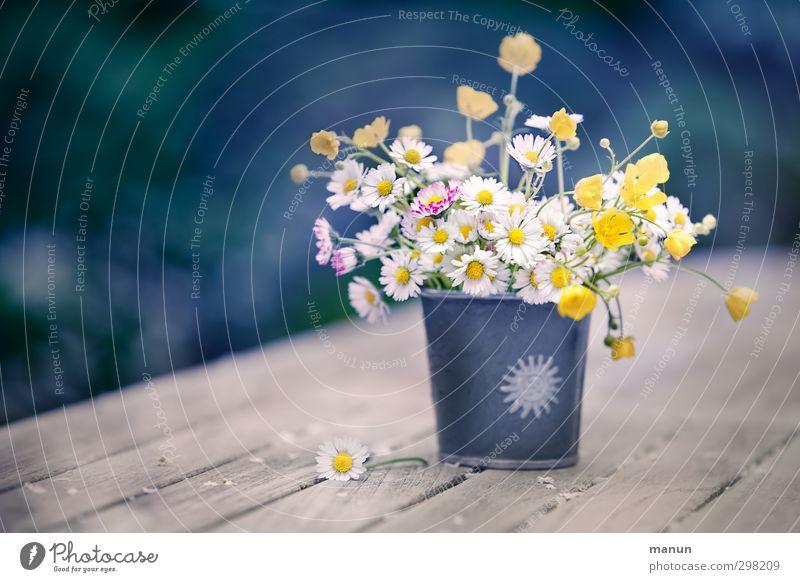 ein Stück Wiese Natur Blume Frühling Blüte Dekoration & Verzierung Blumenstrauß Gänseblümchen Vase Wiesenblume Wildpflanze Frühlingsgefühle Muttertag Frühlingsblume Hahnenfuß gepflückt