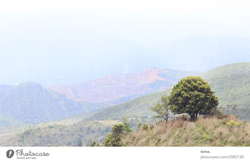 Traumbaum Umwelt Natur Landschaft Himmel Horizont Schönes Wetter Baum Gras Hügel Berge u. Gebirge Pyrenäen Pyrenees-Orientale Lebensfreude selbstbewußt Romantik