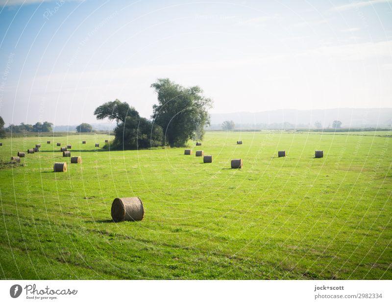 grüne Weite Sommer Landschaft Wolkenloser Himmel Schönes Wetter Baum Wiese Oder Strohballen authentisch frei natürlich Wärme Stimmung friedlich ruhig Freiheit