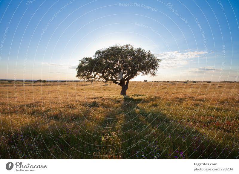 Portugal - Algarve - Landschaft Natur Ferien & Urlaub & Reisen Baum Landschaft ruhig Erholung Blüte Reisefotografie natürlich Freizeit & Hobby Idylle Tourismus Postkarte Paradies Autobahn Wildnis