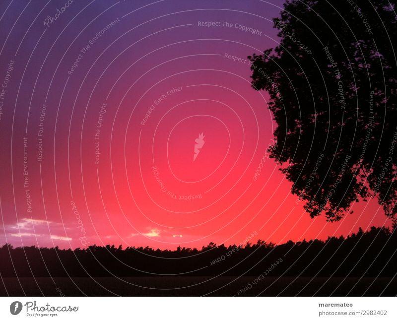 unbelieveable sunset Landschaft Himmel Sonnenaufgang Sonnenuntergang Sommer Pflanze Baum Feld Wald außergewöhnlich schön violett rosa rot schwarz Stimmung