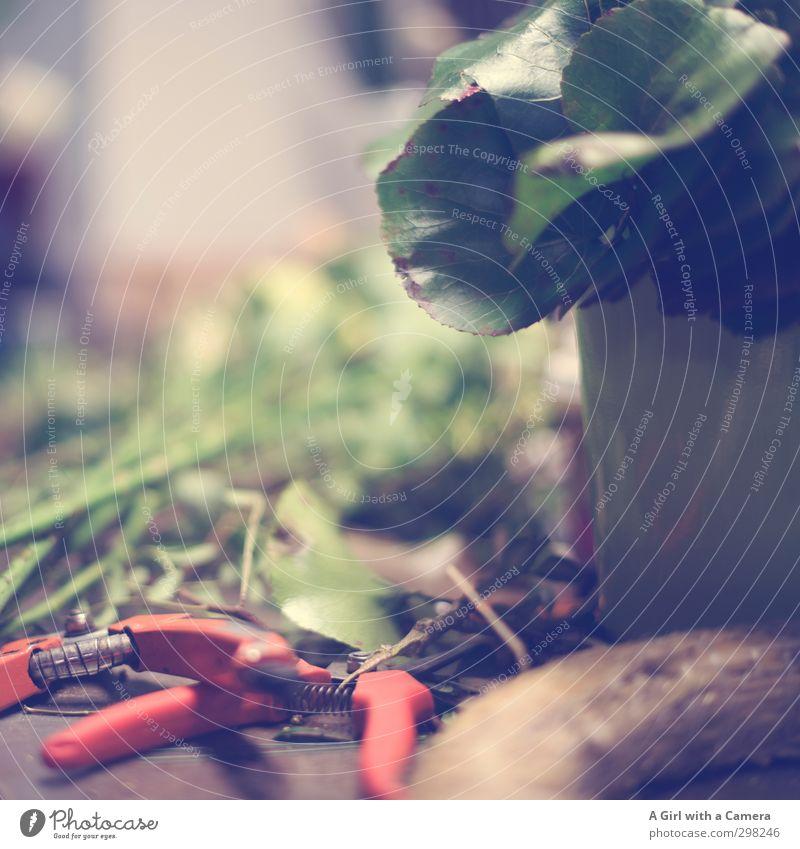 hinter den Kulissen Frühling Blume Arbeit & Erwerbstätigkeit Floristik Handwerk verschönern Basteln Zange Blattgrün Blumenstengel Hobelbank Gedeckte Farben