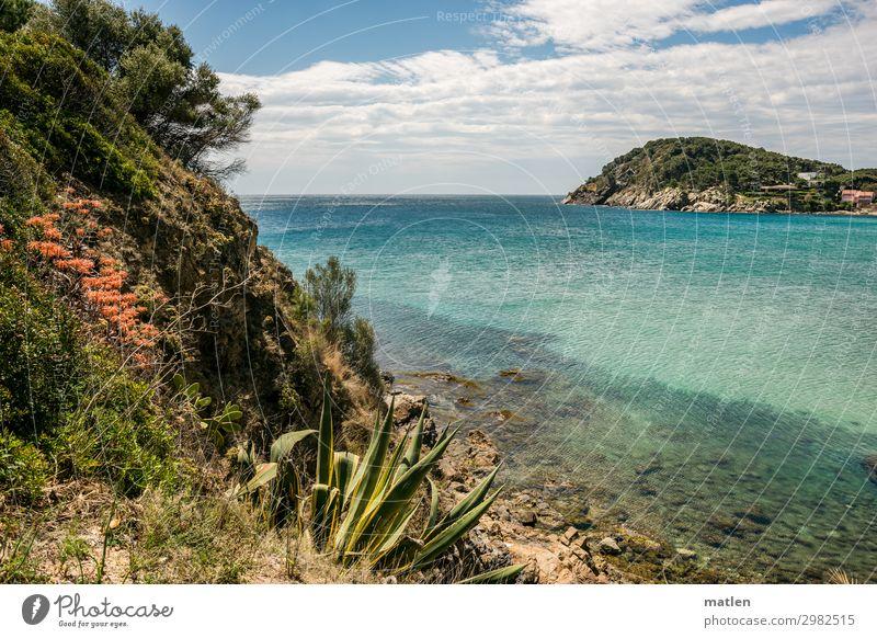 Costa brava Natur Landschaft Pflanze Luft Wasser Himmel Wolken Horizont Frühling Schönes Wetter Blume Gras Sträucher Kaktus Blatt Felsen Berge u. Gebirge Küste