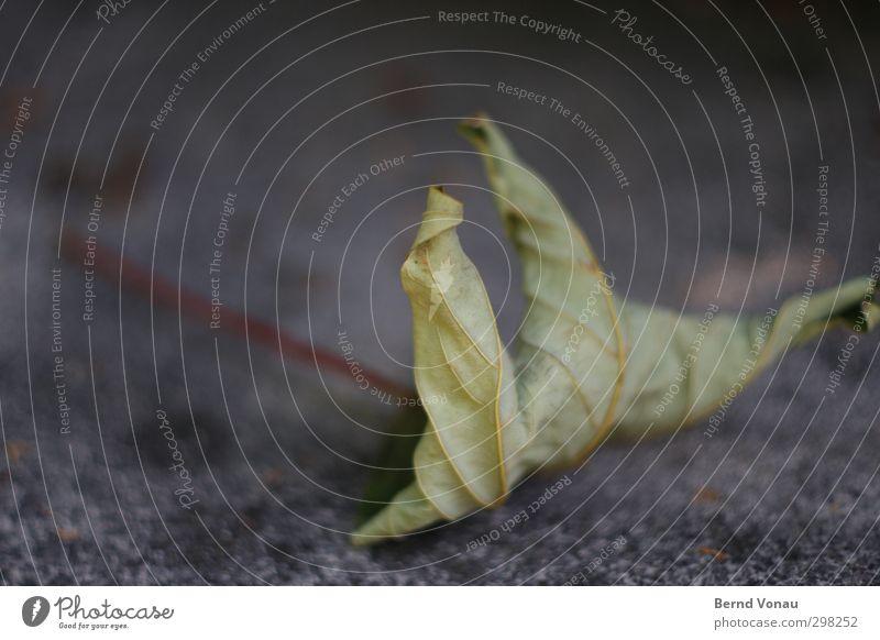 Herbst Origami Natur Pflanze Blatt fallen liegen dehydrieren alt trocken braun grau Stimmung Vergänglichkeit Vergangenheit sterben veloren herbstlich