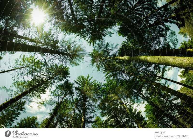 abgehoben | in den Himmel Sommer Sonne wandern Energiewirtschaft Umwelt Natur Landschaft Pflanze Tier Wolken Frühling Klima Wetter Schönes Wetter Baum Blatt