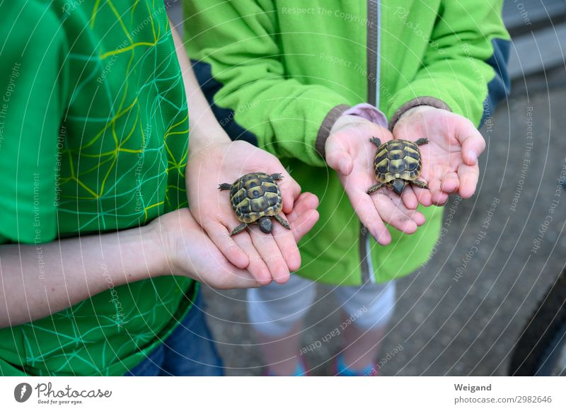 Schildkrötenbande Tier Haustier genießen streichen Tierliebe Kind Kindergarten Farbfoto Außenaufnahme