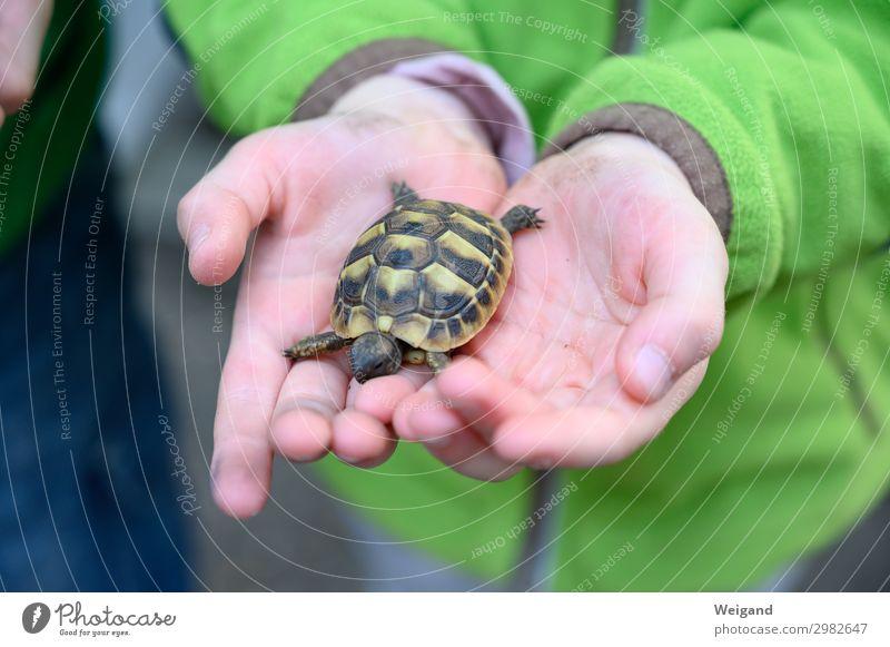 Schildkröte Kindererziehung Kindergarten Hand 3-8 Jahre Kindheit Tier Haustier 1 berühren streichen exotisch Zusammenhalt Farbfoto Textfreiraum unten
