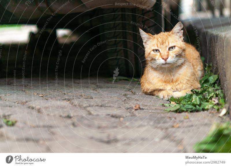 Katzenportrait auf der Straße schön Gesicht Sommer Haus Natur Tier Pelzmantel Haustier sitzen hell niedlich gelb grau grün weiß Einsamkeit Farbe Auge Säugetier