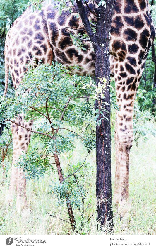 standhaft Tierporträt Sonnenlicht Kontrast Licht Tag Menschenleer beeindruckend Baumstamm Farbfoto Außenaufnahme Detailaufnahme Muster Beine groß Fernweh