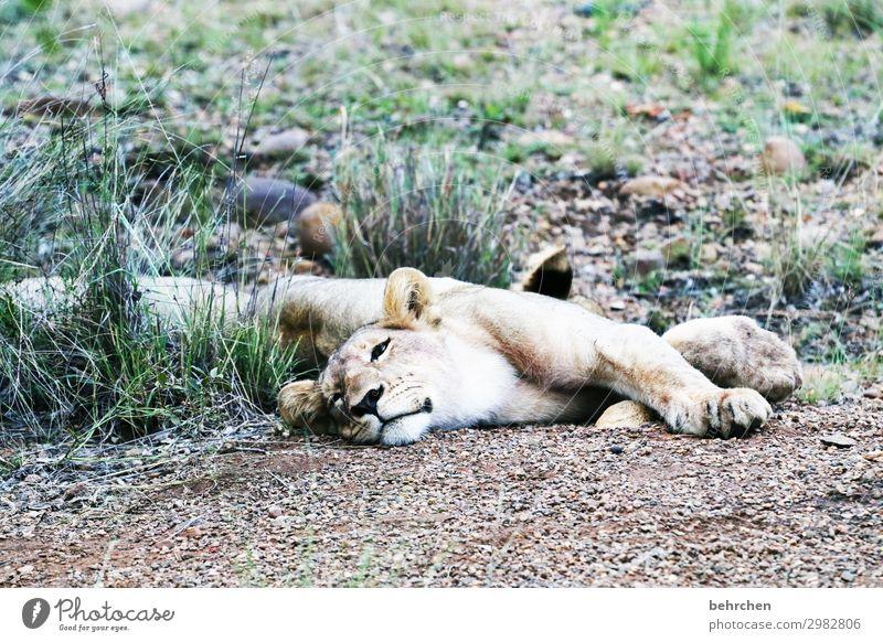 fresskoma Ferien & Urlaub & Reisen schön Erholung Tier Ferne Tourismus außergewöhnlich Freiheit Ausflug Wildtier Abenteuer fantastisch gefährlich schlafen
