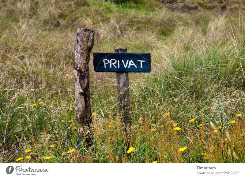 PRIVAT (QF) Ferien & Urlaub & Reisen Natur Pflanze grün Blume Holz gelb Umwelt Wege & Pfade Wiese Gefühle Gras braun Schilder & Markierungen Hinweisschild