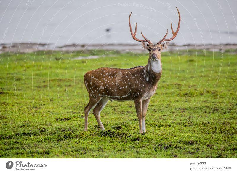 Blick ins Wochenende Ferien & Urlaub & Reisen Natur Landschaft Tier Wald Ferne Umwelt Gras Tourismus Freiheit Ausflug Regen elegant Wildtier Abenteuer