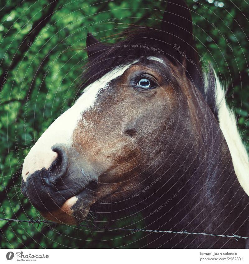 Natur Tier Auge Wiese braun wild Kopf elegant niedlich Pferd Bauernhof Ohr Beautyfotografie Behaarung ländlich