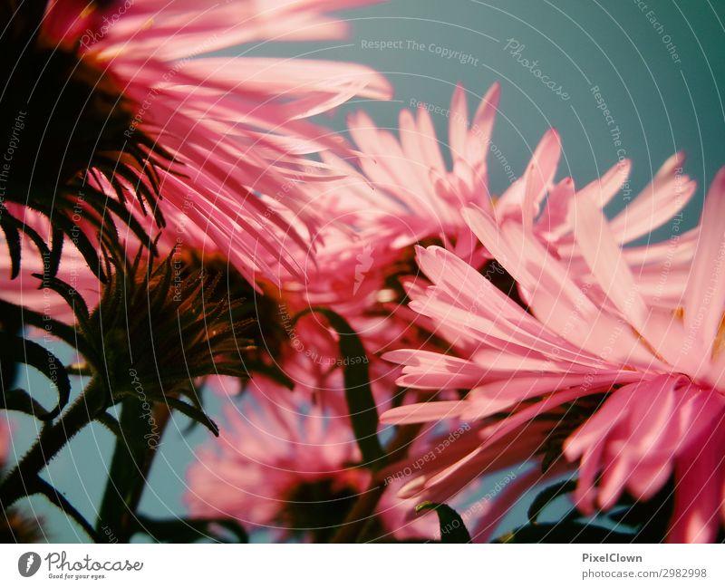 Blüten elegant Ferien & Urlaub & Reisen Tourismus Ausflug Umwelt Natur Landschaft Pflanze Tier Blume Blatt Grünpflanze Wildpflanze Topfpflanze Wiese Feld