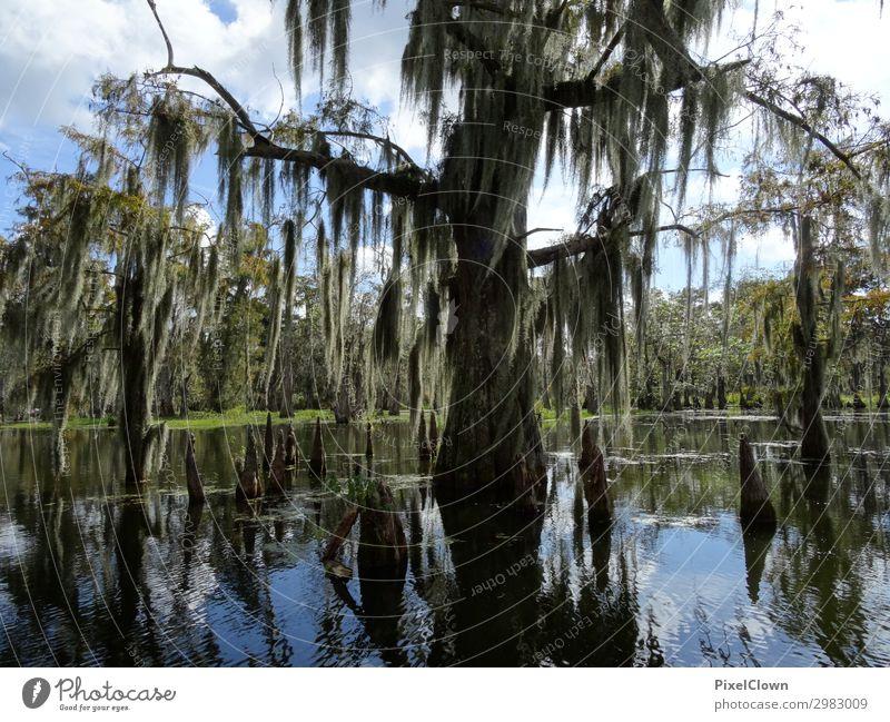 Sümpfe Ferien & Urlaub & Reisen Tourismus Ausflug Ferne Safari Expedition Umwelt Natur Landschaft Pflanze Tier Baum Moos Wildpflanze Moor Sumpf Wachstum grün