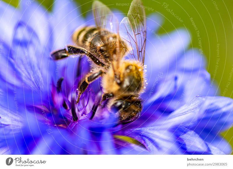 kleine wichtigkeit Umwelt Natur Klimawandel Blume Blüte Garten Wiese Wildtier Biene Tiergesicht Flügel 1 Blühend Duft fliegen Fressen schön Honig Nektar Pollen