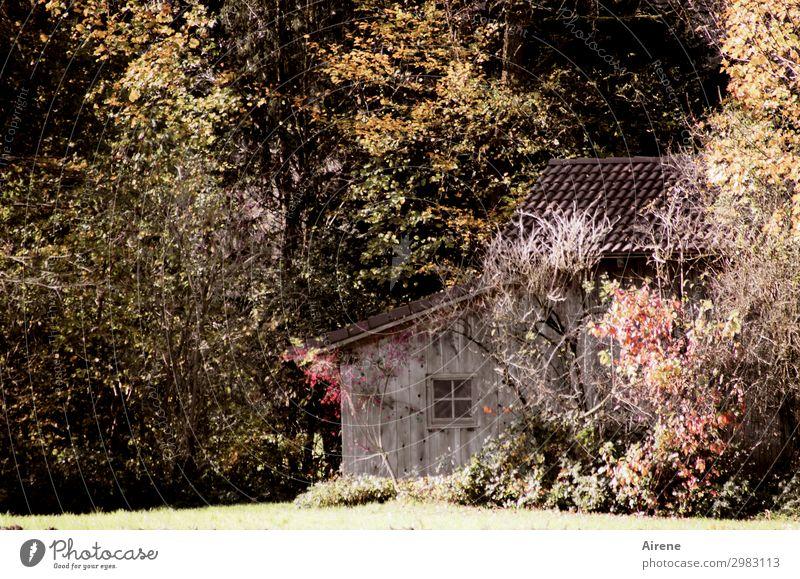 Schutz-Hütte Landschaft Herbst Baum Herbstlaub Wald Herbstwald Haus Holzhaus Fenster Scheune Häusliches Leben einfach Freundlichkeit natürlich braun rot