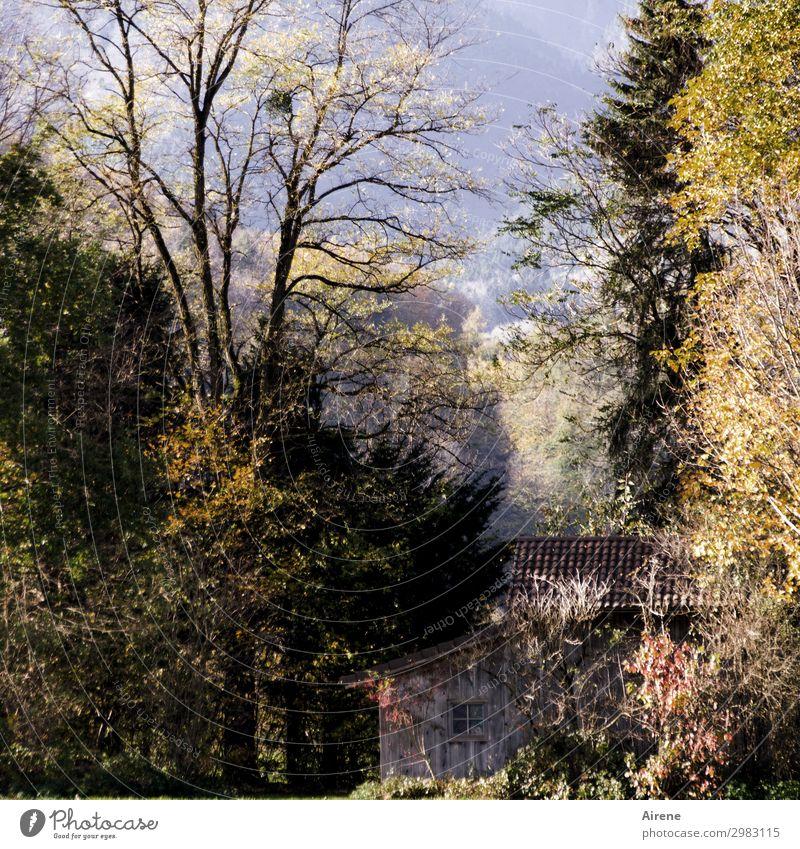 Wenn einem mal wieder alles zu viel wird... Landschaft Herbst Herbstlaub Wald Berge u. Gebirge Hütte Holzhütte Scheune Häusliches Leben einfach ruhig Einsamkeit