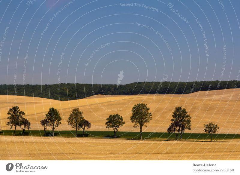 Pittoreske Landschaft Ferien & Urlaub & Reisen Ausflug Landwirtschaft Forstwirtschaft Natur Pflanze Erde Himmel Wolkenloser Himmel Sonnenlicht Sommer Wetter