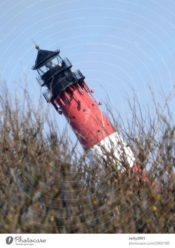schiefer Leuchtturm... Sträucher Nordsee fallen leuchten bedrohlich gruselig rebellisch Angst bizarr Desaster Endzeitstimmung Perspektive Surrealismus Verfall