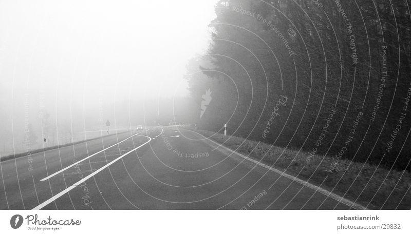 Freie Fahrt weiß schwarz Wald Straße Wege & Pfade Linie Nebel Verkehr fahren Fahrbahn