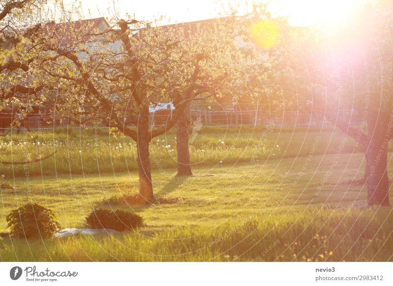 Sommerlicher Garten Natur Landschaft Schönes Wetter Baum Park Wiese natürlich gelb grün Lebensfreude Frühlingsgefühle Gartenpflanzen sommerlich Wärme