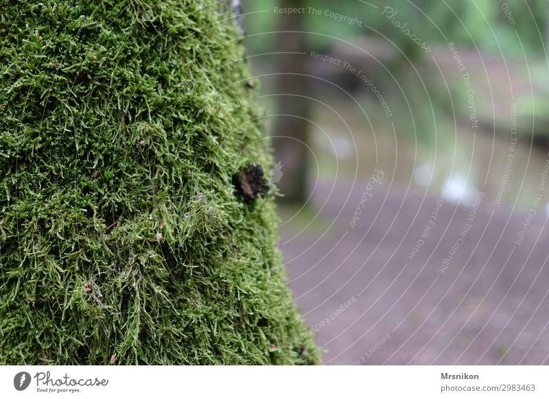 Moos Natur Tier Sommer Baum Wald Moosteppich Baumrinde Waldboden Einsamkeit leer ruhig Gelassenheit Farbfoto Gedeckte Farben Außenaufnahme Menschenleer