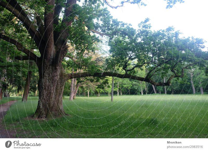 Flow Umwelt Natur Landschaft Sonne Sonnenaufgang Sonnenuntergang Sonnenlicht Sommer Schönes Wetter Baum Gras Park Wiese ruhig Einsamkeit Freiheit