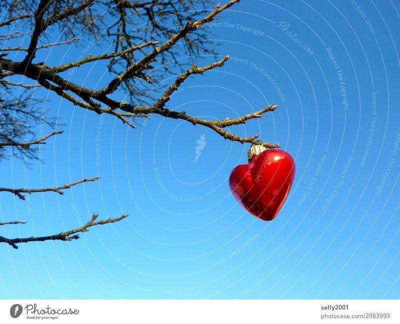 wertvoll | Liebeserklärung... rot Baum Winter außergewöhnlich Herz Ast Wolkenloser Himmel hängen Christbaumkugel aufhängen