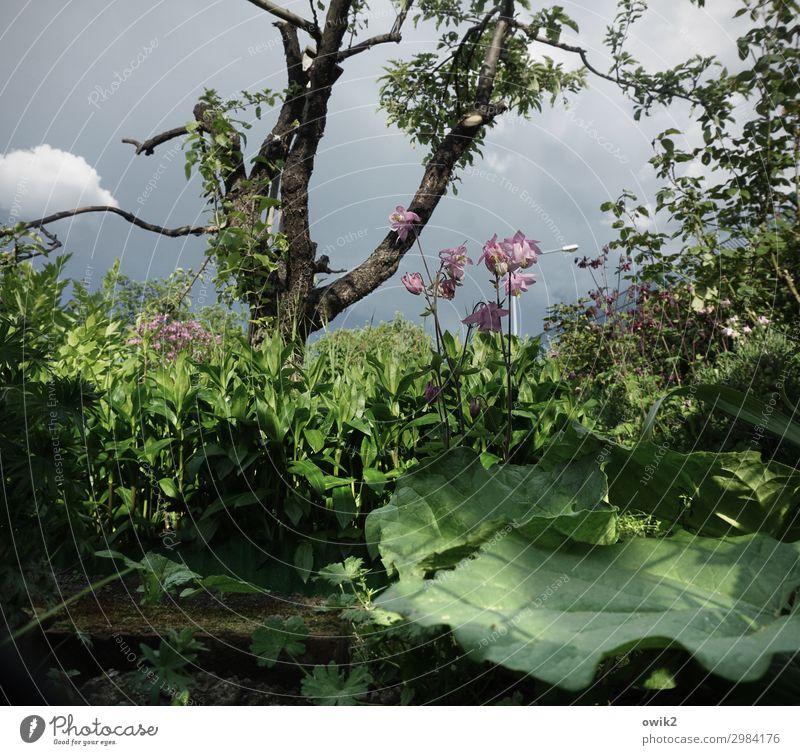 Kraut ohne Rüben Umwelt Natur Landschaft Pflanze Himmel Wolken Frühling Schönes Wetter Baum Blume Sträucher Blüte Grünpflanze Wildpflanze Garten Blühend nah