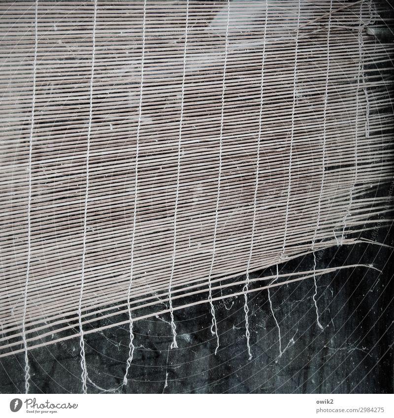 An seidenen Fäden Vorhang Lamellenjalousie Schnur alt hängen trist trocken Schutz Sicherheit Bast schäbig verfallen Zahn der Zeit Schaden Farbfoto