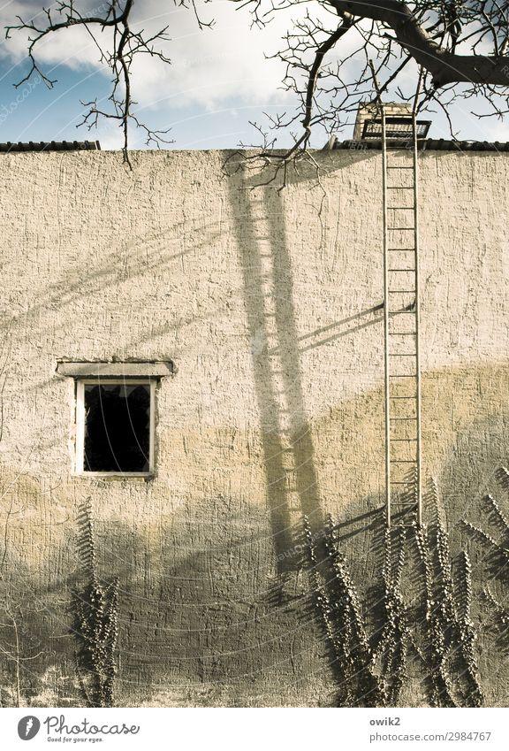 Für Aufsteiger Himmel Wolken Baum Zweige u. Äste Efeu Falkenberg Kleinstadt Haus Mauer Wand Fassade Fenster Feuerleiter hoch blau gelb verfallen Vergänglichkeit