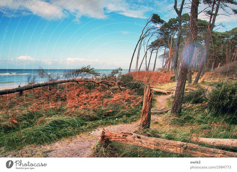 Psycho Ferien & Urlaub & Reisen Ausflug Umwelt Natur Landschaft Pflanze Herbst Schönes Wetter Baum Gras Sträucher Ostsee wild Darß Weststrand Windflüchter