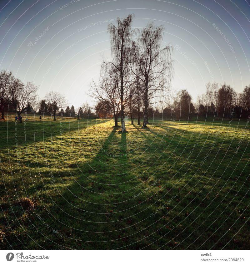 Wald- und Wiesenbild Umwelt Natur Landschaft Pflanze Wolkenloser Himmel Horizont Herbst Schönes Wetter Baum Gras Birke leuchten stehen Wachstum standhaft