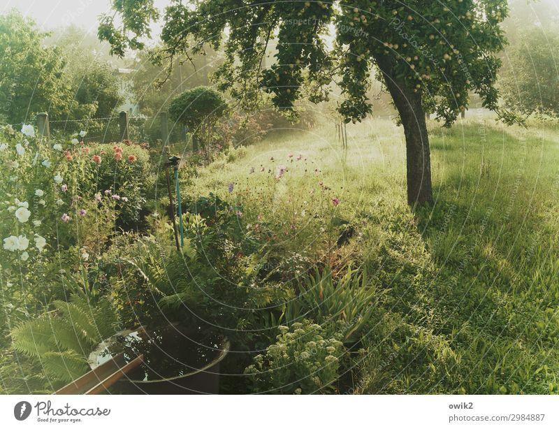 Grün und duftend Umwelt Natur Landschaft Pflanze Sommer Schönes Wetter Baum Blume Gras Sträucher Garten Wiese atmen Blühend Duft mehrfarbig grün Idylle Paradies