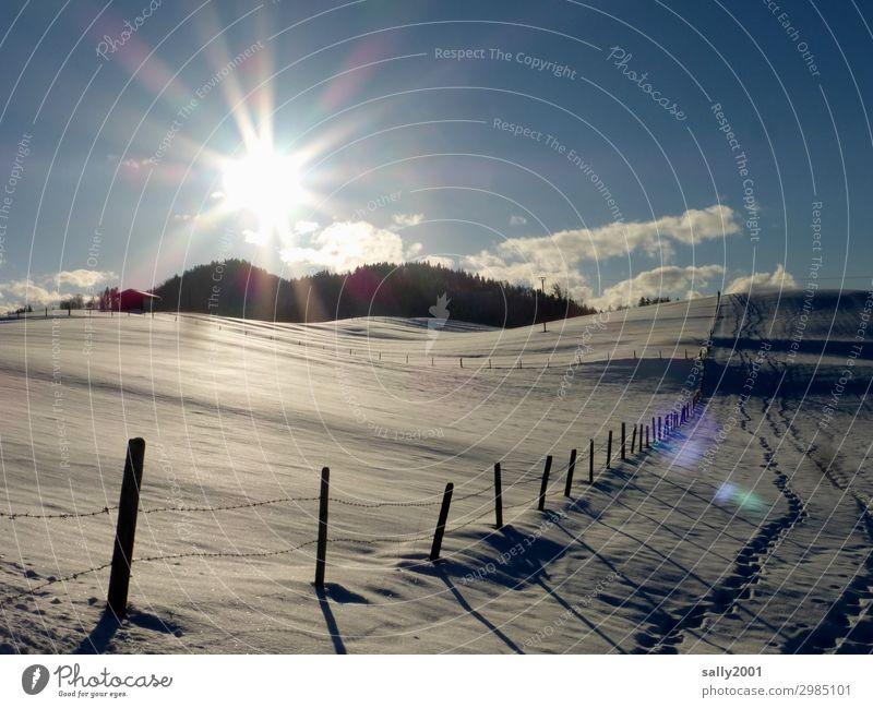 Wintersonne... Umwelt Landschaft Sonnenlicht Schönes Wetter Hügel Alpen Zufriedenheit Einsamkeit Horizont Idylle Wege & Pfade Schnee Zaun Zaunpfahl Holzpfahl