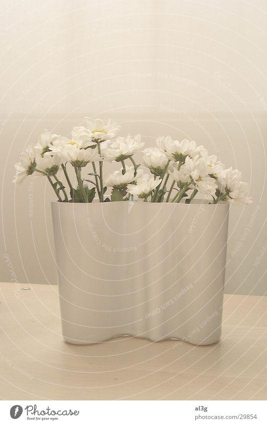 aalto weiss Blume Vase weiß Häusliches Leben weiches licht