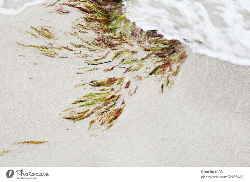 Fließende Bewegungen Natur Urelemente Sand Pflanze Algen Wasserpflanze Küste Strand Ostsee Meer Ornament elegant Flüssigkeit frisch maritim nass weich braun