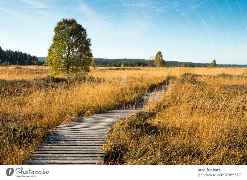 Goldenes Venn Ausflug wandern Umwelt Natur Landschaft Pflanze Himmel Sonne Sommer Schönes Wetter Moor Hochmoor Hohes Venn Belgien Holzpfad Steg Erholung